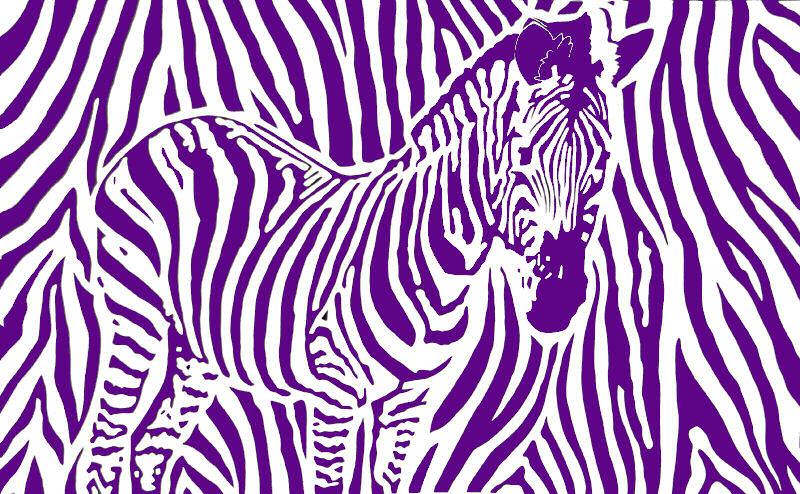 zebre violet